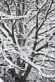 Snowy forest landscape Stock Photography