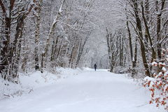 Forest track winter landscape with woman Stock Photography