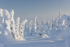 Snowy forest in Lapland, Finland. A photo taken at very snowy winter day. The ground is covered by very thick snow. Tall and thin trees are all white due to snow Stock Photography