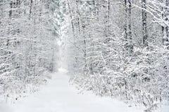 Snowy forest. Latvia Royalty Free Stock Photos