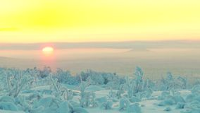Snowy forest with low vegetation in the background of the rising sun. stock video footage
