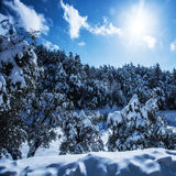 Snowy forest in mountains Royalty Free Stock Image