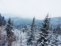 Snowy forest in mountains Royalty Free Stock Photo