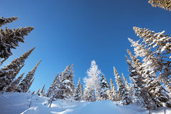 Snowy forest in mountains blue sky Royalty Free Stock Photos
