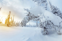 Snowy forest in mountains blue sky Stock Photo