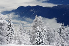 Snowy forest on mountainside. Snow covered trees on mountainside with foggy valley in background stock images