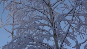 Snowy forest nature stock footage