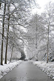 Snowy forest in the Netherlands Stock Photo