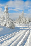 Snowy forest no.1 Royalty Free Stock Photo