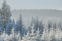 Snowy forest no.2 Royalty Free Stock Photos