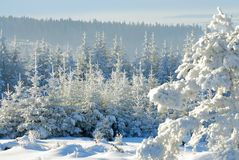 Snowy forest no.6 Royalty Free Stock Photos