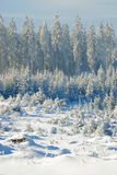 Snowy forest no.7 Royalty Free Stock Photos