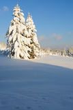 Snowy forest no.9 Royalty Free Stock Image