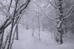 Snowy forest on North slope Aibga Ridge Western Caucasus Stock Image