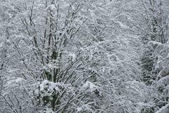 Snowy forest on North slope Aibga Ridge Western Caucasus Stock Photo