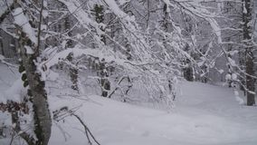 Snowy forest on North slope Aibga Ridge Western Caucasus at all-season resort Gorky Gorod stock footage video stock video