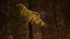 Snowy forest in the park at night. Trees in the snowdrifts stock video