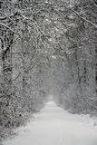 Snowy forest path Royalty Free Stock Image