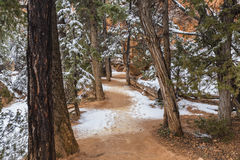 Snowy Forest Path in Bryce Canyon National Park Royalty Free Stock Photography