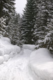 Snowy forest road. Curvy forest road lined with pine trees covered in snow Royalty Free Stock Photography