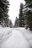 Snowy forest road. Forest road lined with pine trees covered in snow Stock Photography