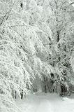 Snowy forest road Stock Photography