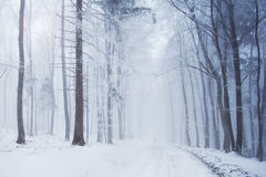 Snowy forest road stock photo