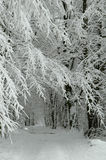 Snowy forest road. Just after bilzzard royalty free stock photos