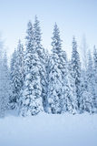 Snowy forest road with high trees Stock Image