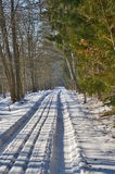 Snowy forest road Stock Images