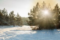 Snowy forest scene. A beautiful snowy forest scene with a snowy road Stock Photography