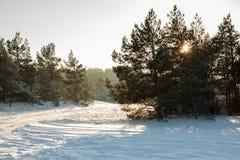 Snowy forest scene Stock Photo