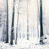 Snowy forest scene Stock Image