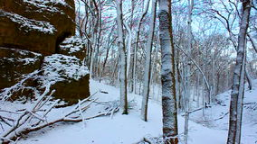 Snowy Forest Scenery Illinois stock video