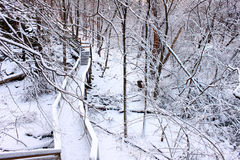 Snowy Forest Scenery Illinois. Boardwalk through a snow covered forest of northern Illinois Stock Photo