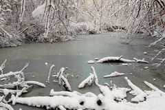 Snowy Forest Scenery Illinois. Frozen wetland in a forest of northern Illinois Royalty Free Stock Image