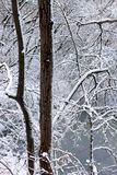 Snowy Forest Scenery Illinois. Snow covers everything in forest of northern Illinois Royalty Free Stock Images