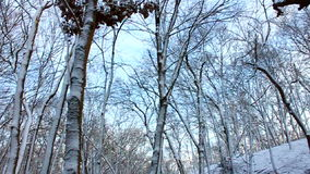 Snowy Forest Scenery Illinois stock video footage