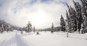 Snowy forest seen from piste. A snowy forest seen from a cross-country skiing piste royalty free stock photography