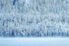 Snowy forest on the shore. Of a mountain lake stock photo