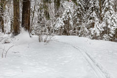 Snowy forest and skitracks in winter park Stock Photo