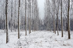 Snowy forest Stock Photos