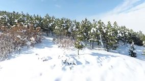 Snowy forest stock video footage