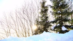 Snowy forest. The sun shines through the trees. stock footage