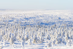 Snowy forest in sunshine. Snowy forest on sunny day stock images