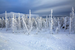 Snowy forest on top of the mount Belaya. Ural, Russia. Snowy forest on top of the mountain.  Ski resort Mount Belaya (russian: Белая), Ural region, Russia Stock Image