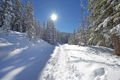 Snowy Forest Trail Royalty Free Stock Images