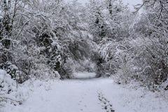 Snowy Forest Trail in der französischen Landschaft während der Weihnachtsjahreszeit/-winters lizenzfreies stockbild