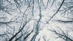 Snowy forest tree branches. Snow falls stock footage