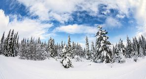 Snowy forest under blue skies stock photo